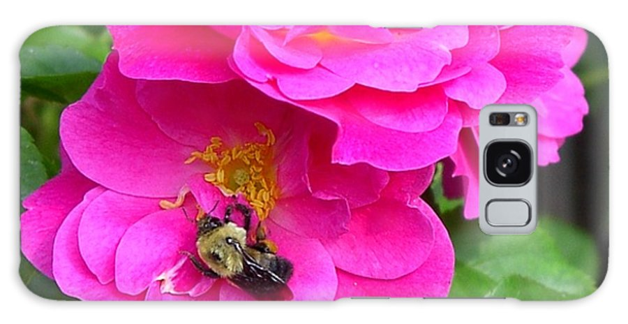 Charity Galaxy Case featuring the photograph Jc And Bee by Mary-Lee Sanders