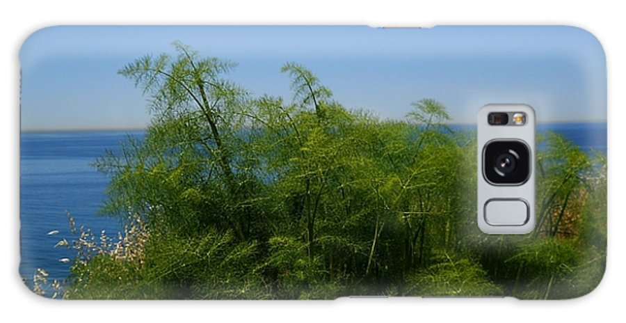 Ferns Galaxy S8 Case featuring the photograph Maidenhair Ferns By The Sea by Eve Paludan
