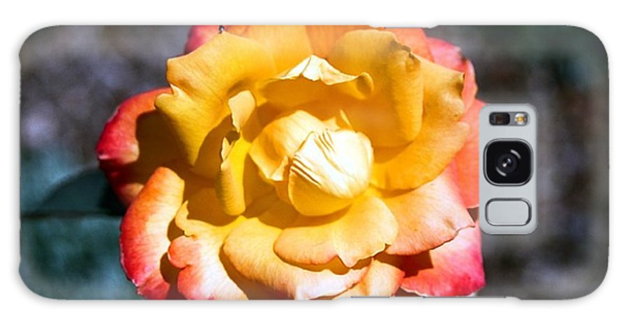 Rose Galaxy Case featuring the photograph Red Tipped Yellow Rose by Dean Triolo