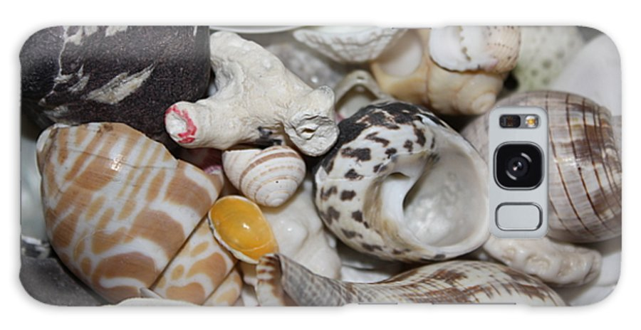 Seashells Galaxy S8 Case featuring the photograph She Sells Seashells by Erin Rosenblum