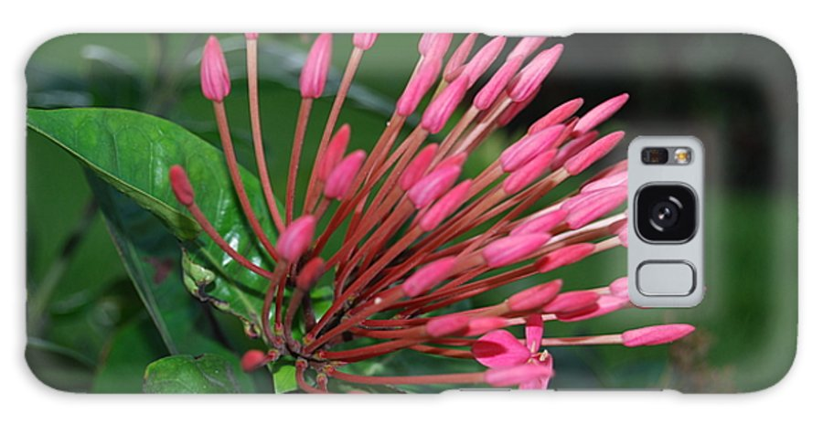 Flowers Galaxy S8 Case featuring the photograph Standing Tall by Michael L Gentile