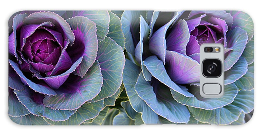 Cabbage Galaxy S8 Case featuring the photograph The Cabbage Patch by Kristin Elmquist