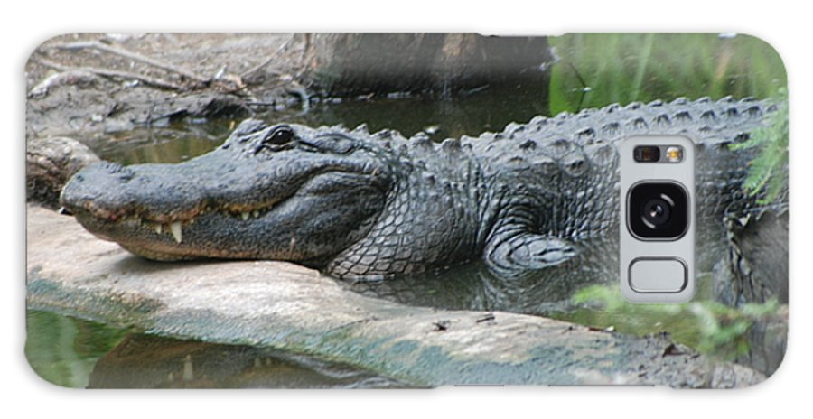 Florida Galaxy S8 Case featuring the photograph The Other Florida Gator by Margaret Fortunato