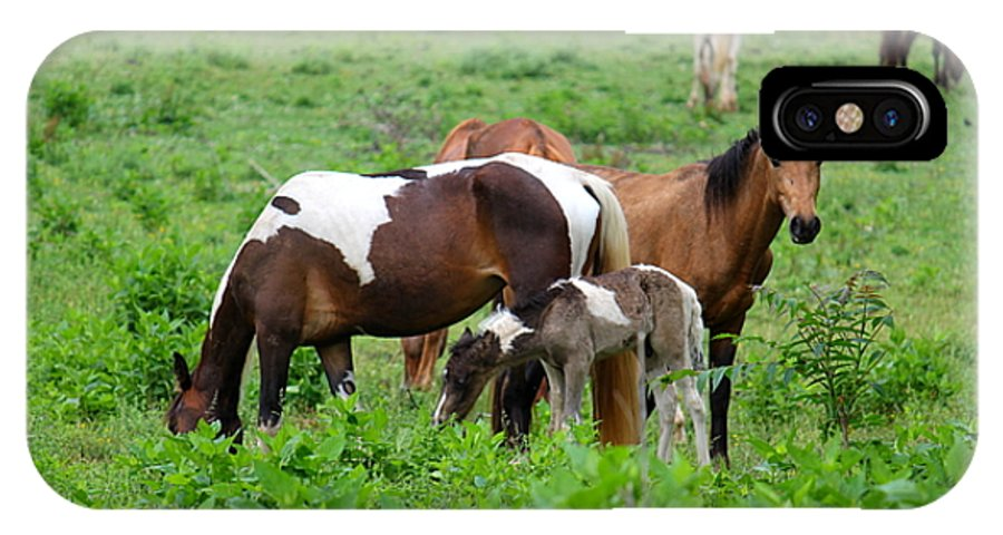 Horse IPhone X Case featuring the photograph Family Time by Carol Turner