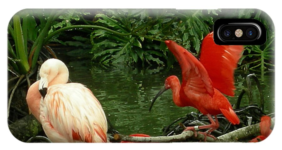 Birds IPhone X Case featuring the photograph Flamingo And Scarlet Ibis by Carol Turner
