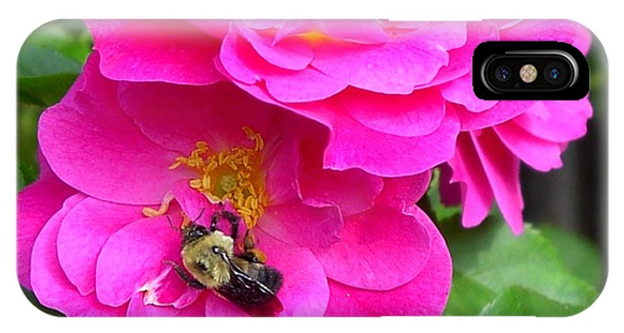 Charity IPhone Case featuring the photograph Jc And Bee by Mary-Lee Sanders