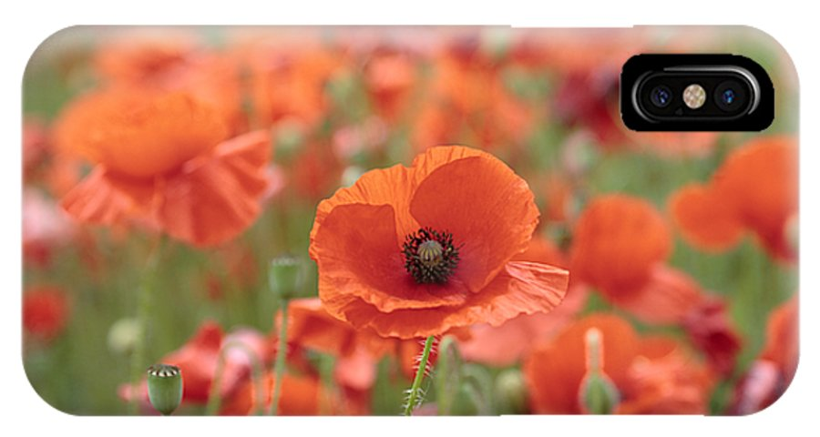 Poppy IPhone X Case featuring the photograph Poppies H by Phil Crean