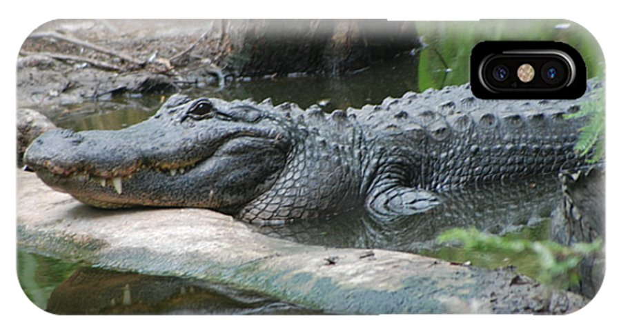 Florida IPhone Case featuring the photograph The Other Florida Gator by Margaret Fortunato