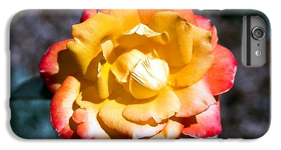 Rose IPhone 6 Plus Case featuring the photograph Red Tipped Yellow Rose by Dean Triolo