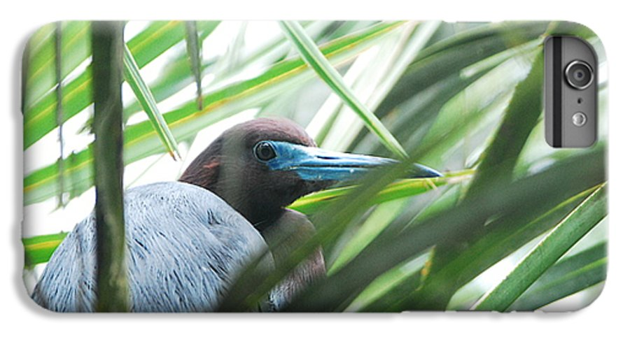 Wings IPhone 6 Plus Case featuring the photograph Under Her Watchful Eye by Margaret Fortunato