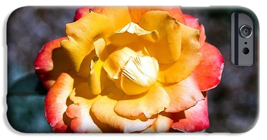 Rose IPhone 6s Case featuring the photograph Red Tipped Yellow Rose by Dean Triolo