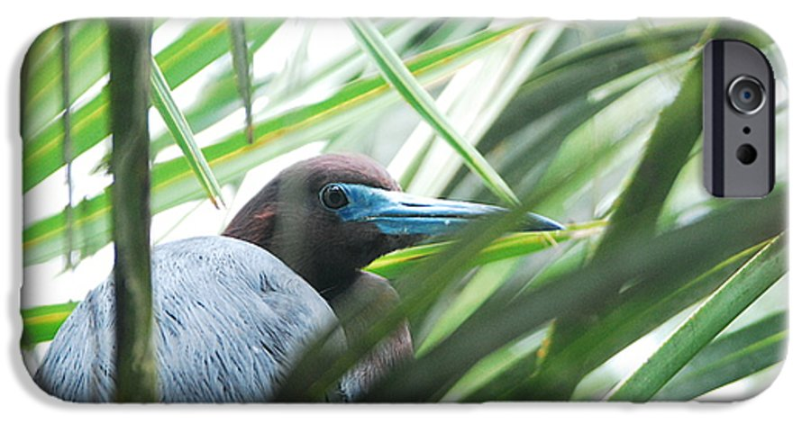 Wings IPhone 6s Case featuring the photograph Under Her Watchful Eye by Margaret Fortunato