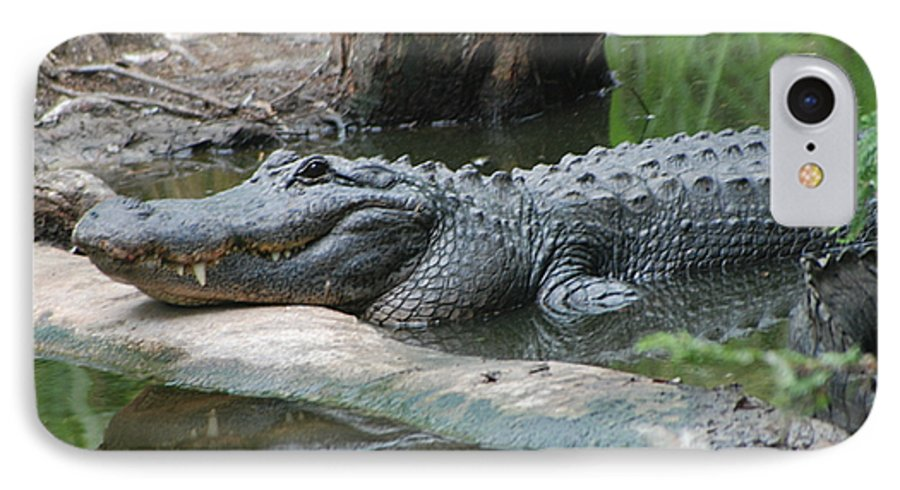 Florida IPhone 7 Case featuring the photograph The Other Florida Gator by Margaret Fortunato