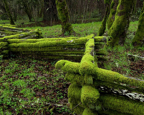 Moss Poster featuring the photograph Mossy Fence 4 by Bob Christopher