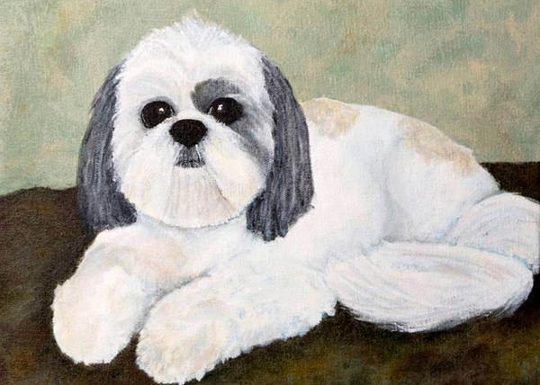 Dog Poster featuring the painting Shih Tzu by Anne Gregorie