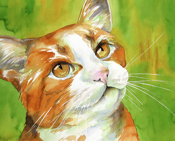 Cat Poster featuring the painting Tan And White Domestic Cat by Cherilynn Wood