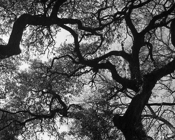 Tree Branches Poster featuring the photograph Tree Gazing by Lindsey Orlando