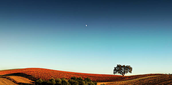 Horizontal Poster featuring the photograph Vineyard Sky Panorama by Larry Gerbrandt