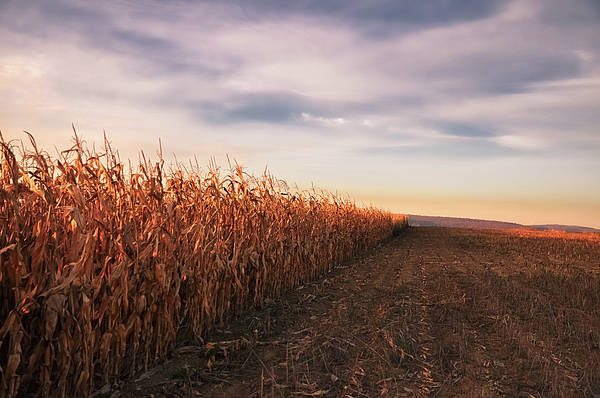 Horizontal Poster featuring the photograph Cornfield by Michael Kohaupt