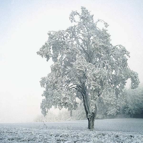 Square Poster featuring the photograph Snowy Winter Landscape by John Foxx