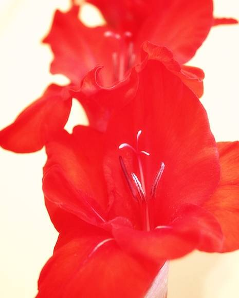 Poster featuring the photograph Gladiola Stem by Cathie Tyler