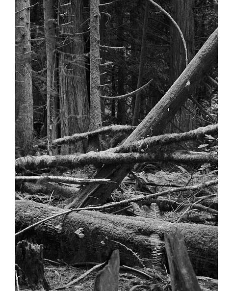 Black Poster featuring the photograph Natural Forest by J D Banks