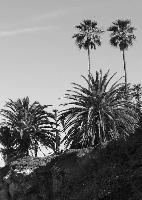 Palms Poster featuring the photograph Palms2 by Shari Chavira