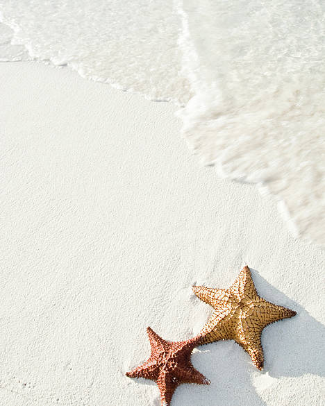 Vertical Poster featuring the photograph Starfish On Tropical Beach by Mehmed Zelkovic