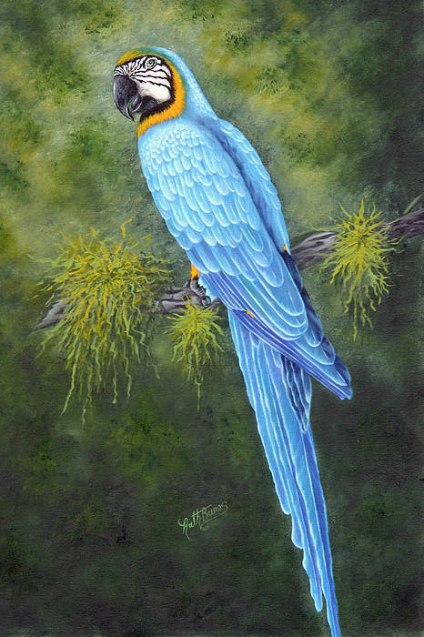 Bird Art Print featuring the painting Buddy by Ruth Bares