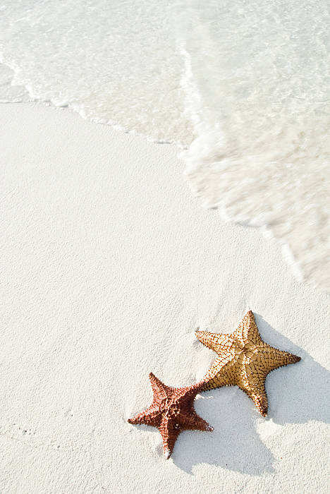 Vertical Art Print featuring the photograph Starfish On Tropical Beach by Mehmed Zelkovic