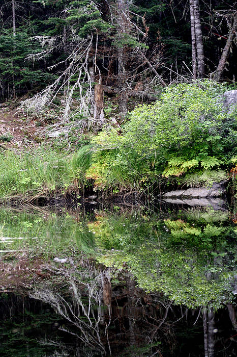Water Art Print featuring the photograph Water Like A Mirror by Greg DeBeck