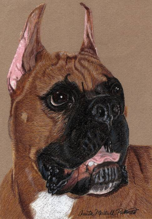Dog Art Print featuring the drawing Boxer Vignette by Anita Putman