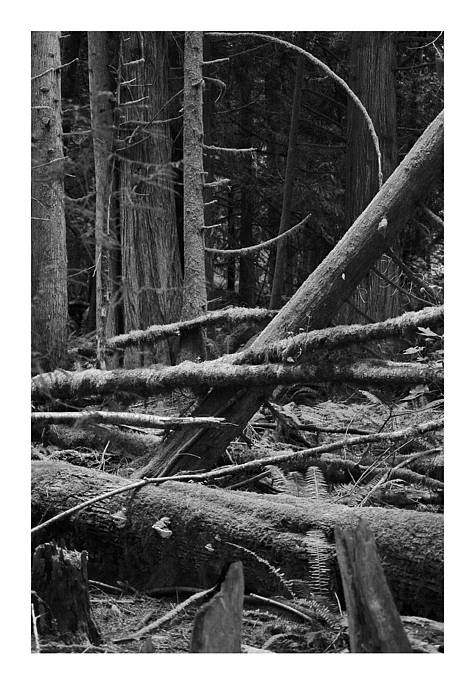 Black Art Print featuring the photograph Natural Forest by J D Banks