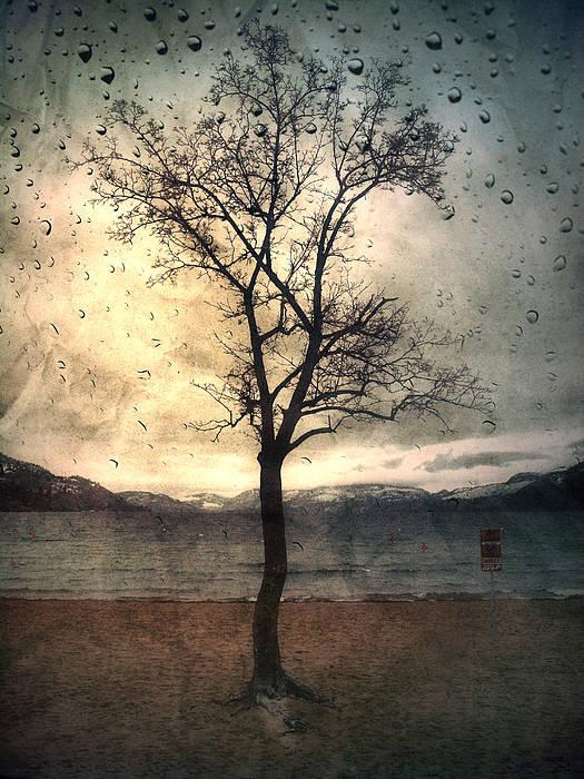Rain Art Print featuring the photograph January 12 2010 by Tara Turner