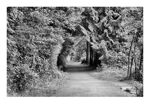 Tunnel Art Print featuring the photograph Forest Tunnel by J D Banks