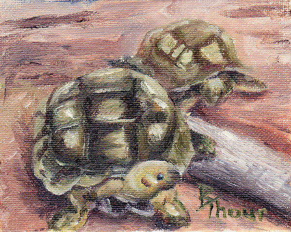 Turtle Art Print featuring the painting Turtle Friends by Brenda Thour