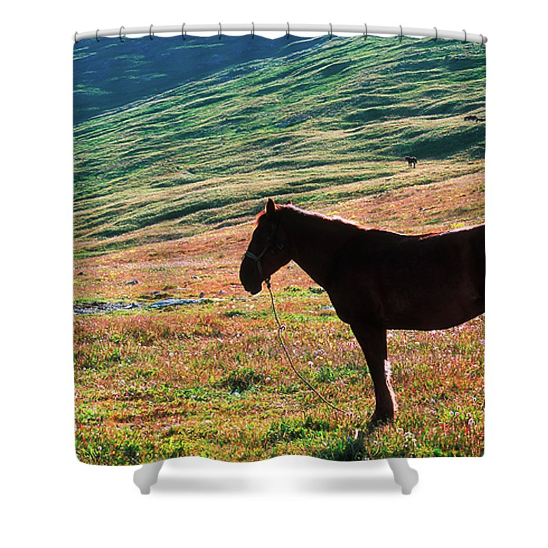 Alone Shower Curtain featuring the photograph Altay by Konstantin Dikovsky