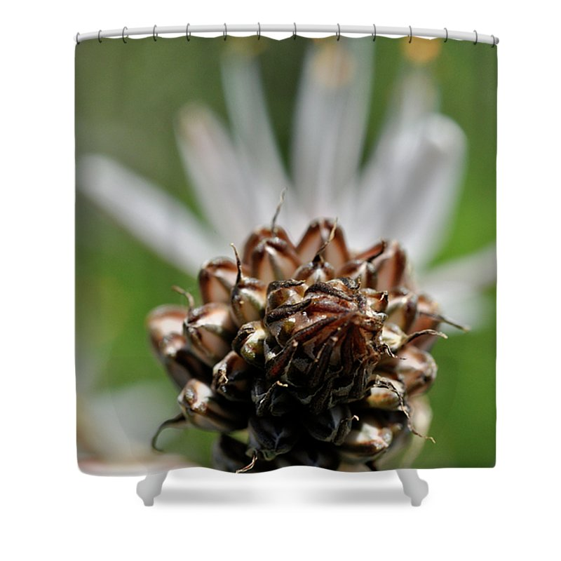 Nature Shower Curtain featuring the photograph at Lachish 1 by Dubi Roman