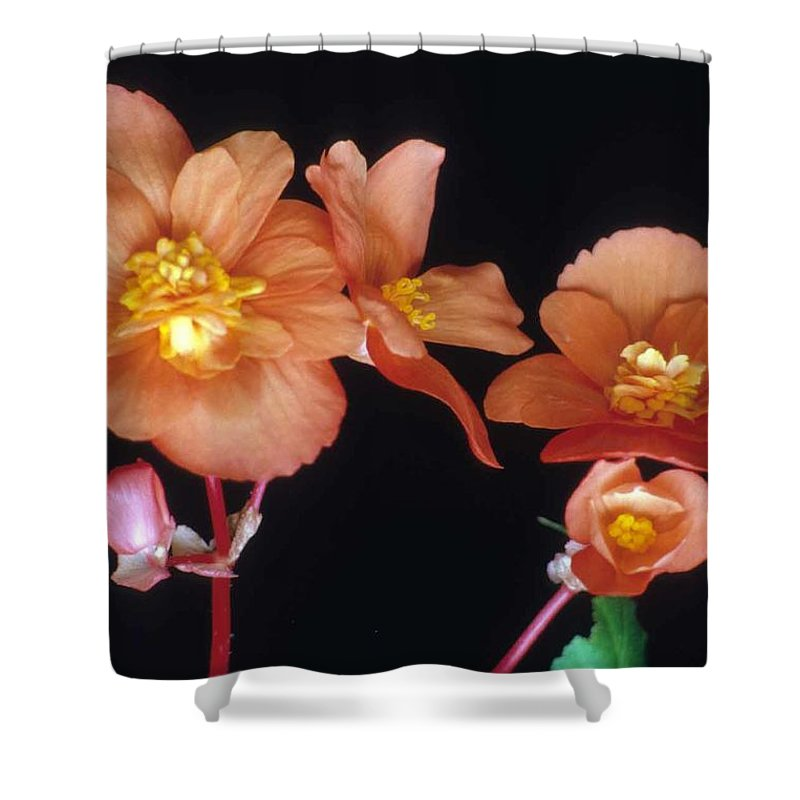 Begonia Shower Curtain featuring the photograph Begonia Buddies by Laurie Paci