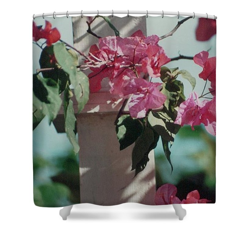 Charity Shower Curtain featuring the photograph Bouganvillea by Mary-Lee Sanders