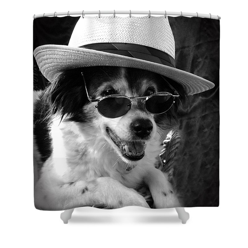 Dogs Shower Curtain featuring the photograph Cool Dog by Cliff Norton