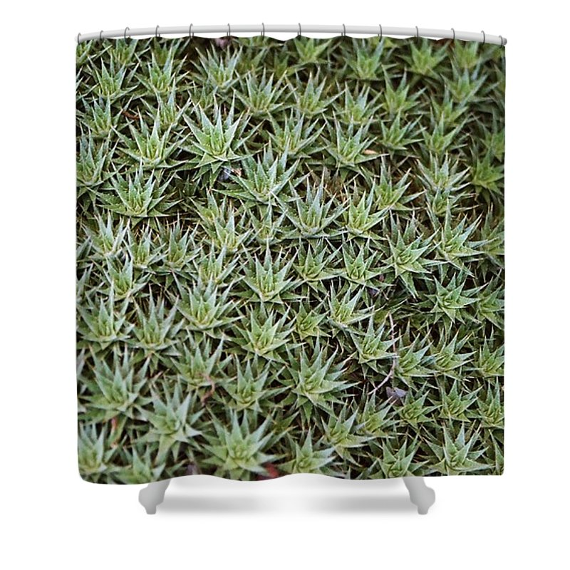 Cactus Shower Curtain featuring the photograph Feild Of Stars by Dean Triolo
