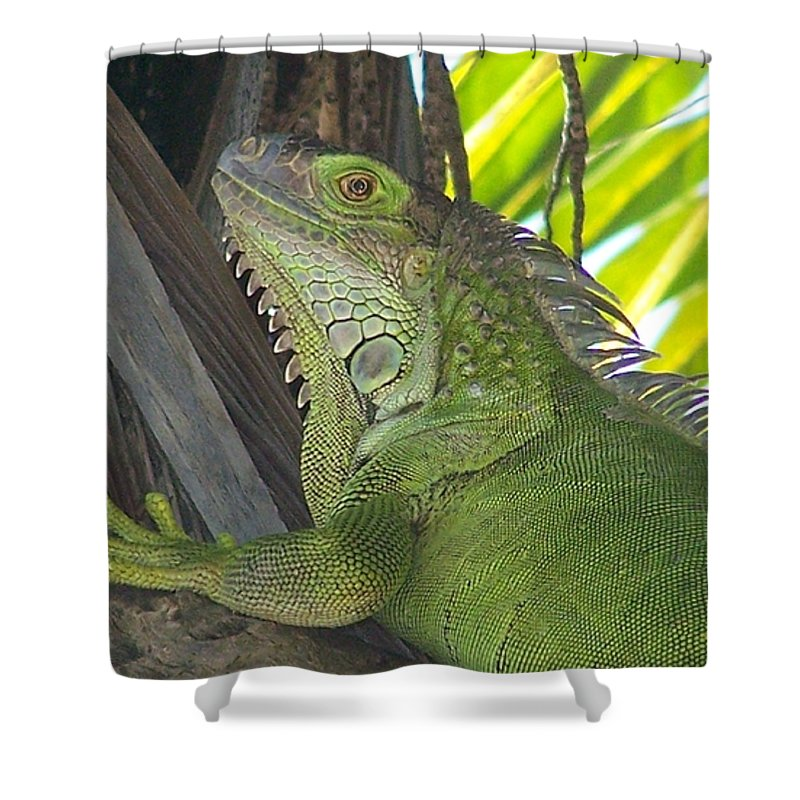Iguano Shower Curtain featuring the photograph Iguana Puerto Rico by Marilyn Holkham