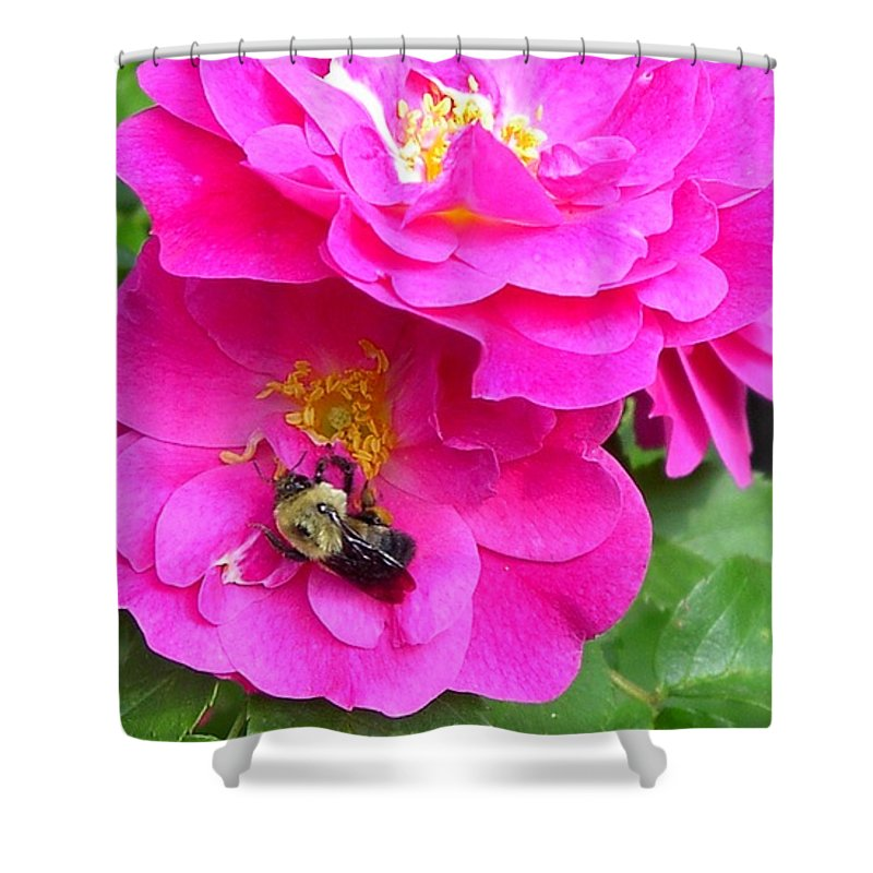 Charity Shower Curtain featuring the photograph Jc And Bee by Mary-Lee Sanders