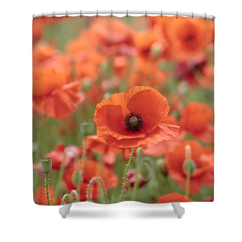 Poppy Shower Curtain featuring the photograph Poppies H by Phil Crean