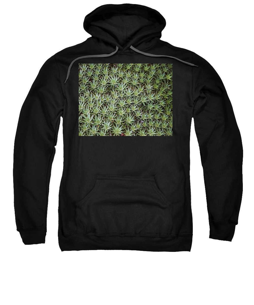 Cactus Sweatshirt featuring the photograph Feild Of Stars by Dean Triolo