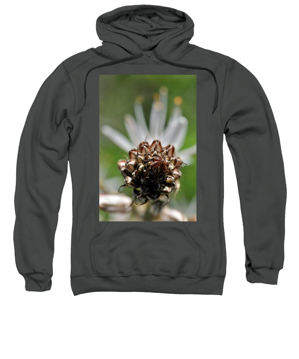 Nature Sweatshirt featuring the photograph at Lachish 1 by Dubi Roman