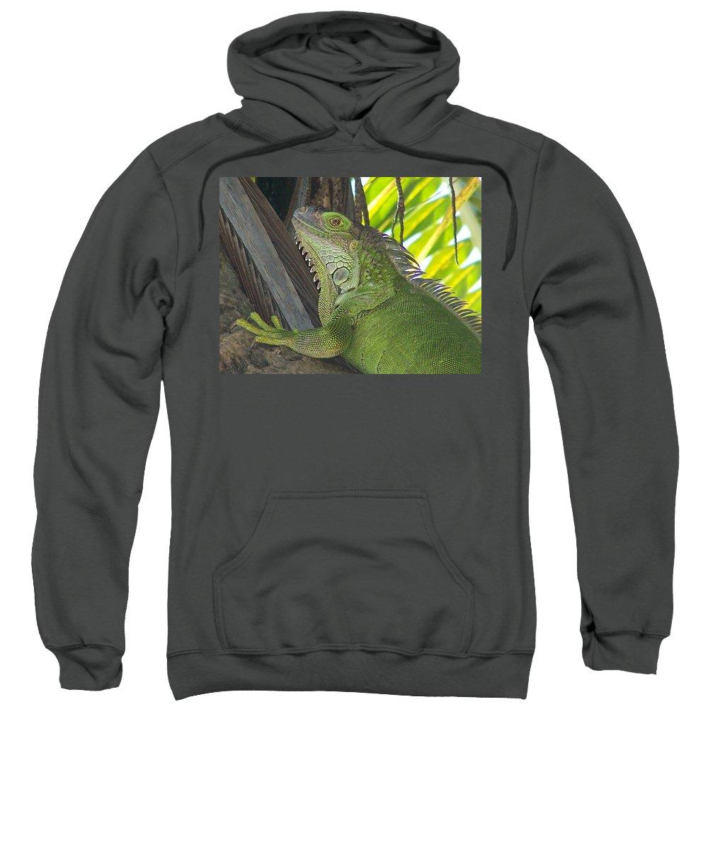 Iguano Sweatshirt featuring the photograph Iguana Puerto Rico by Marilyn Holkham