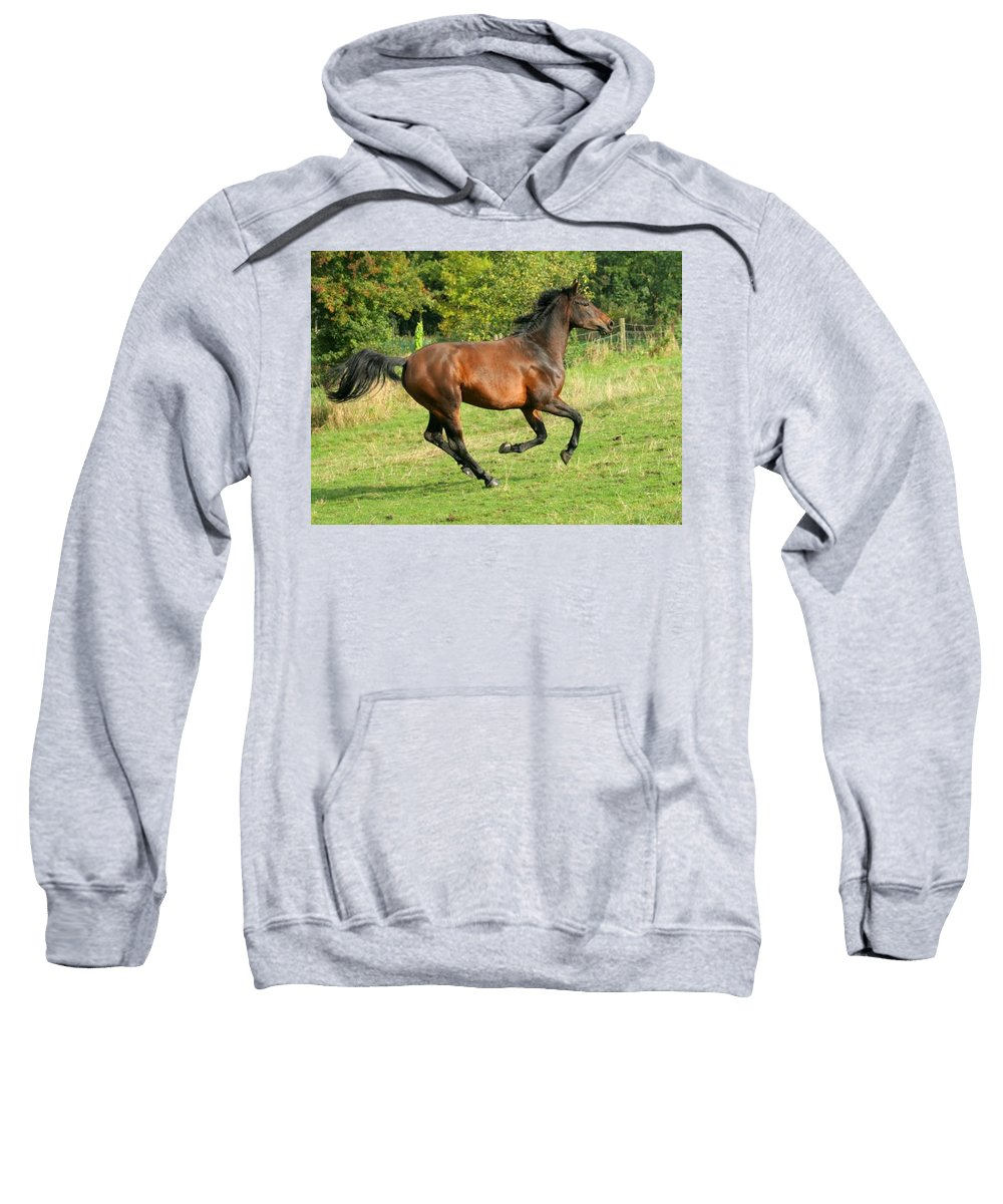 Horse Sweatshirt featuring the photograph Gallop by Angel Ciesniarska