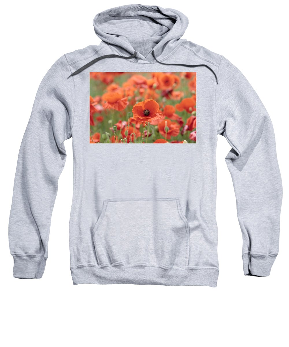 Poppy Sweatshirt featuring the photograph Poppies H by Phil Crean